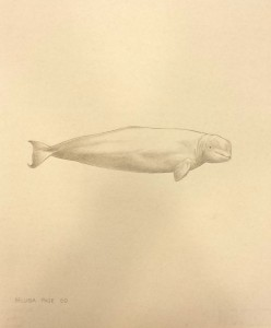 whaledrawing2