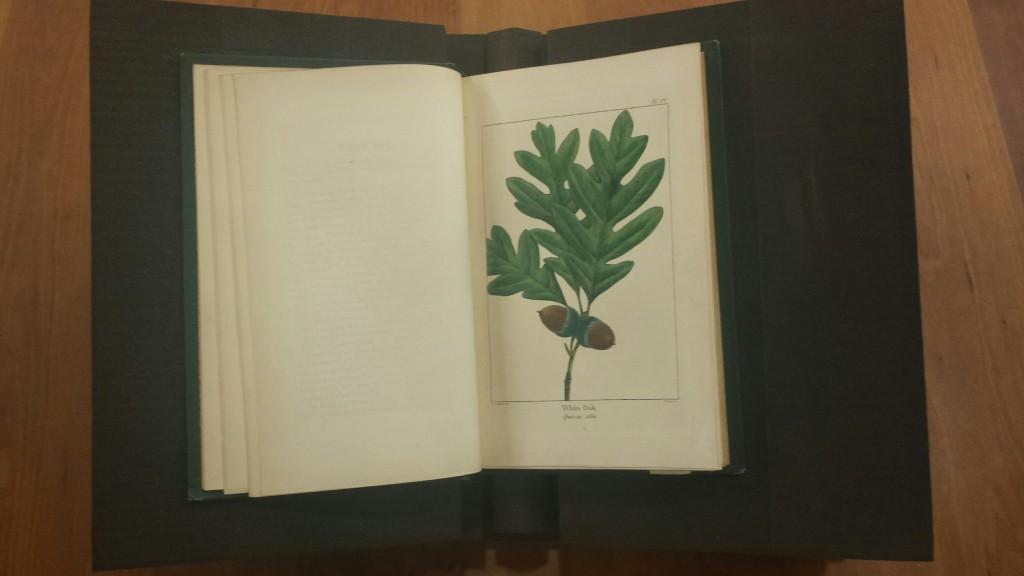 "White Oak illustration. From F. Andrew Michaux, ""North American Sylva: Forest Trees of America, Vol. I"" (Philadelphia: W.M. Rutter & Co. ,1871)"