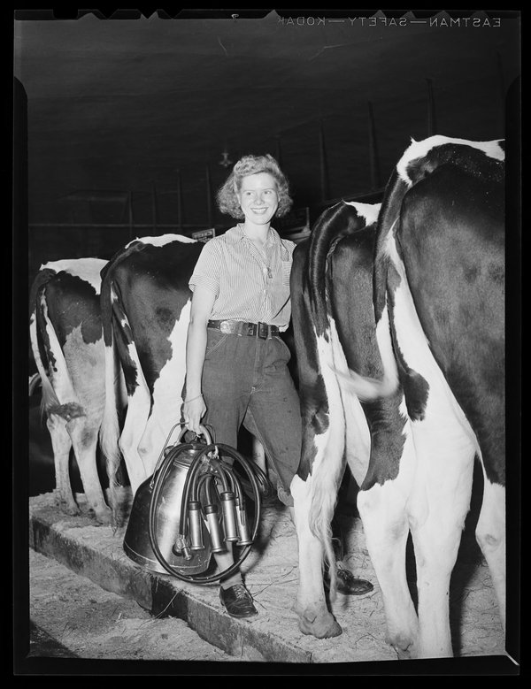 A trainee practices her milking technique.