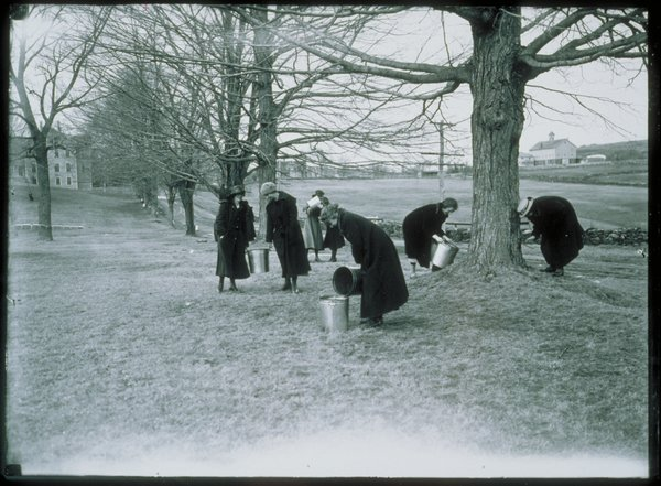 Co-eds gathering maple sap for the war effort, 1918