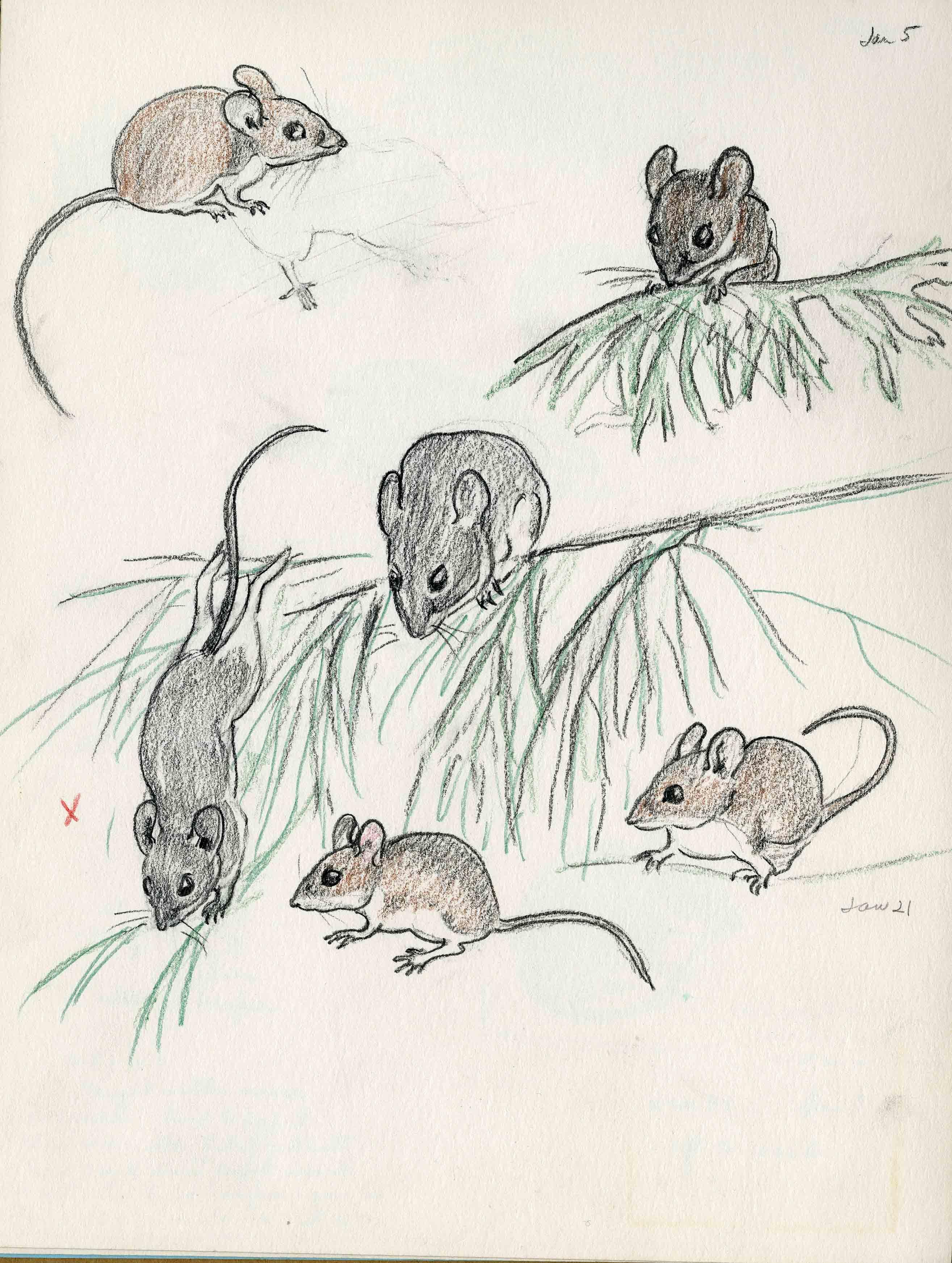 Sketch by Margaret Waring Buck