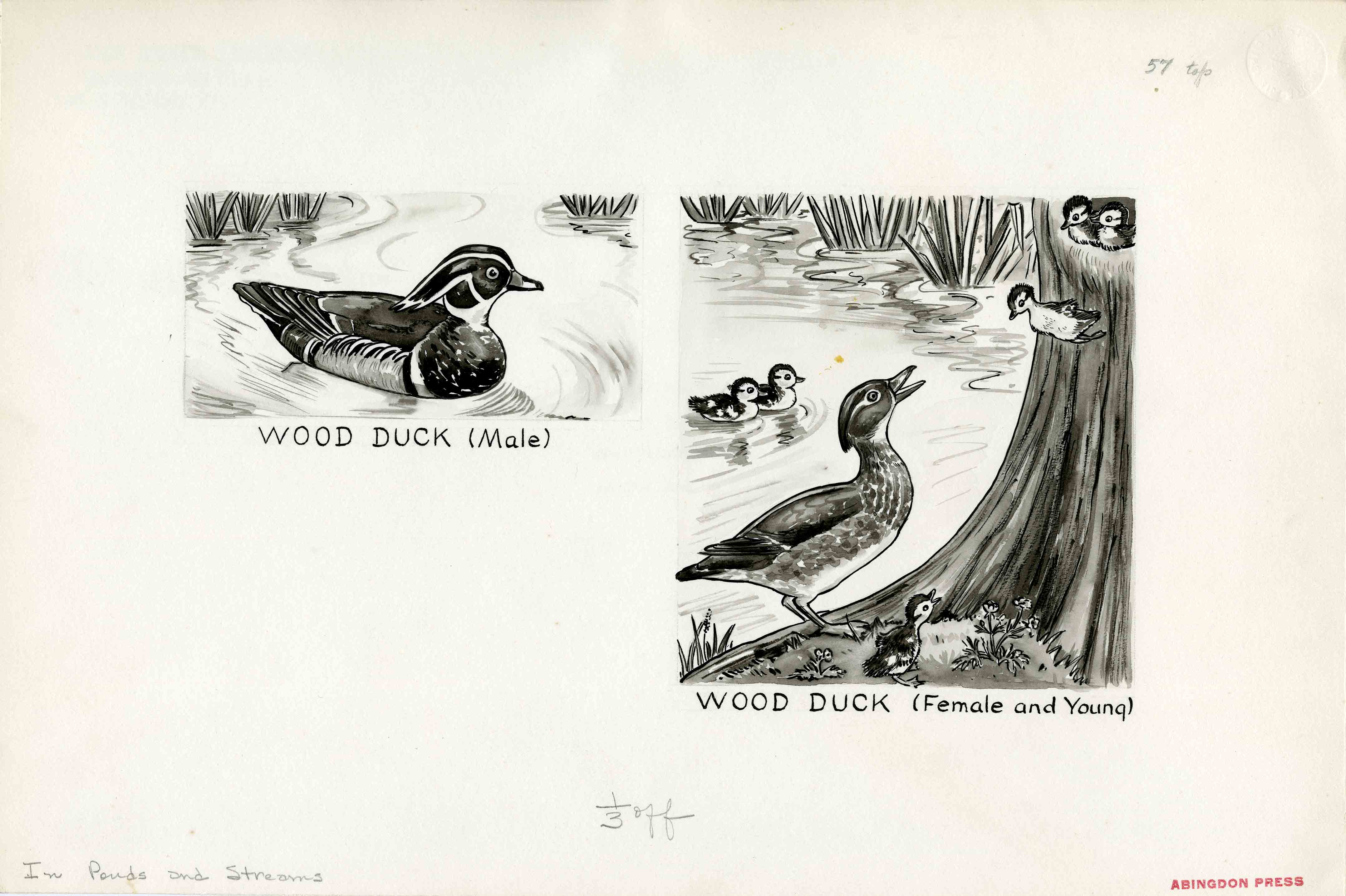 Sketches by Margaret Waring Buck