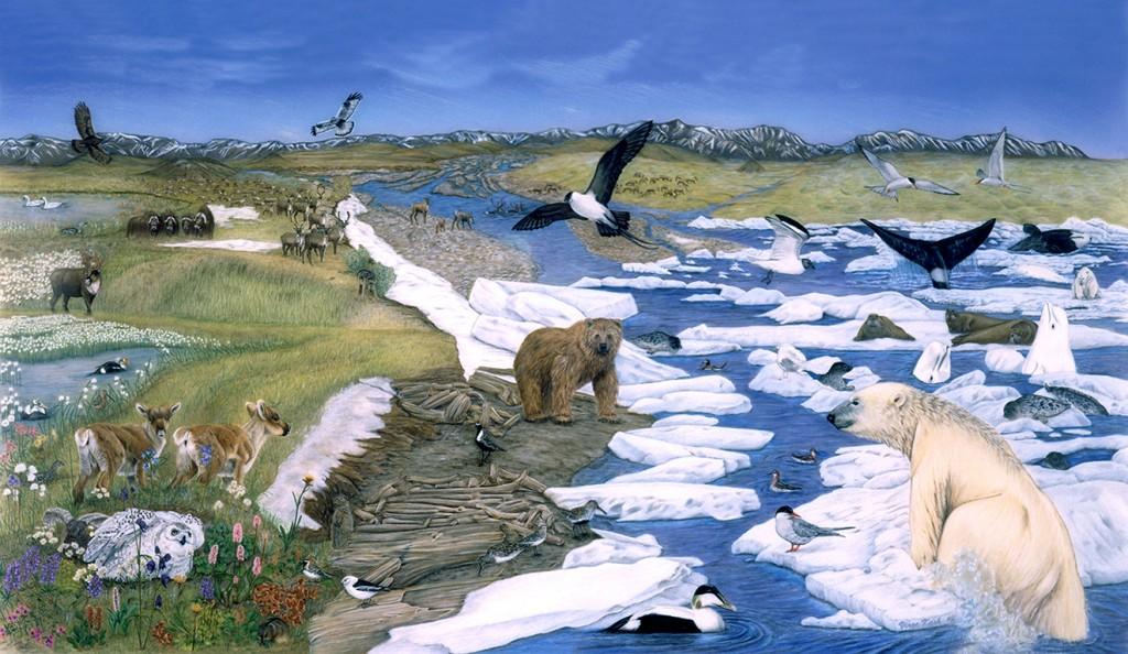 Virge Kask Arctic Wildlife